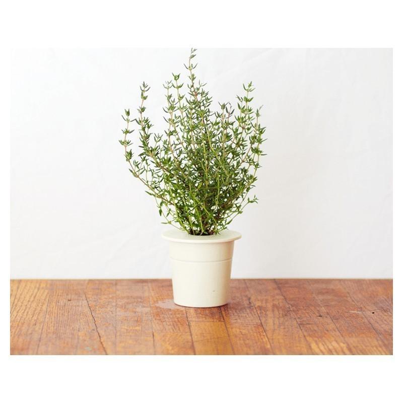 Click & Grow Smart Herb Garden refill Tüümian 3tk