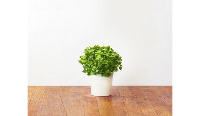 Click & Grow Smart Herb Garden кассета, Петрушка (3 шт)