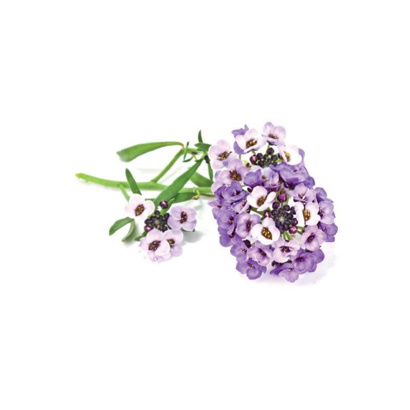 Click & Grow Smart Garden refill Kivikilbik 3tk