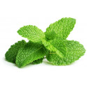 Click & Grow Smart Garden refill Piparmünt 3tk