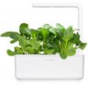 Click & Grow Smart Garden refill Pak Choi 3tk