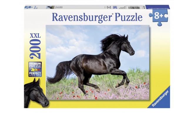 200 elements, horse beauty