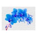 Fototapeet -  Blue excitation - 250x175