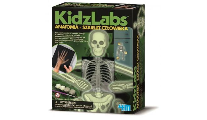 Anatomy of the human skeleton