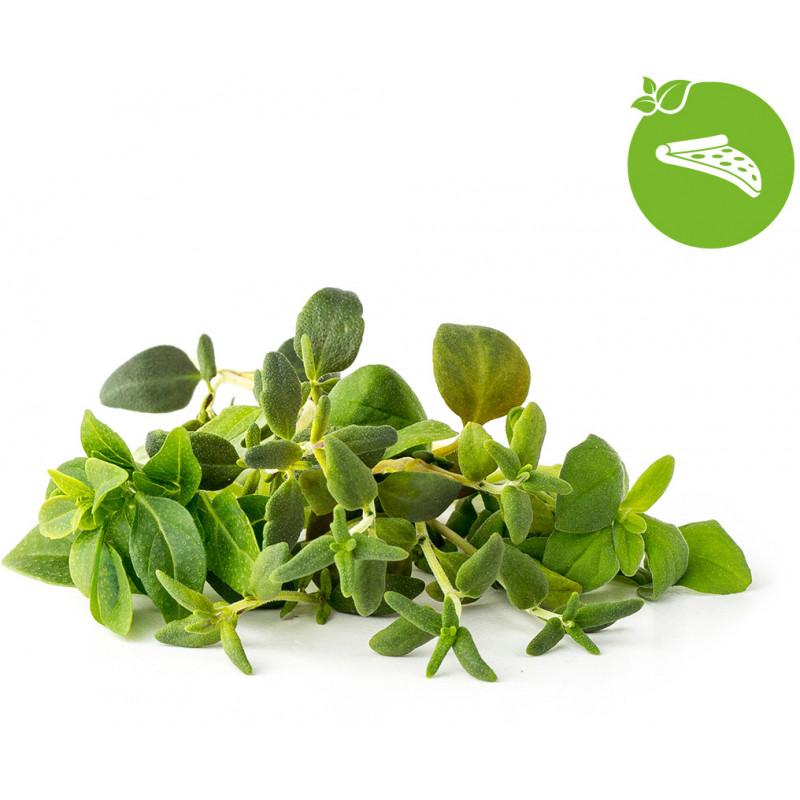 Click & Grow Plant Pod Italian Mix 9tk