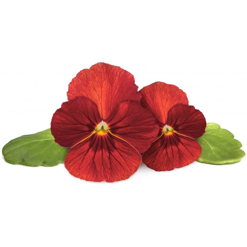 Click & Grow Smart Garden Refill Punane võõrasema 3tk