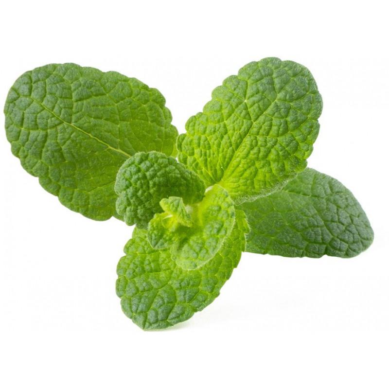 Click & Grow Smart Garden refill Õunmünt 3tk