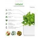 Click & Grow Smart Garden refill Lehtsalat 3tk