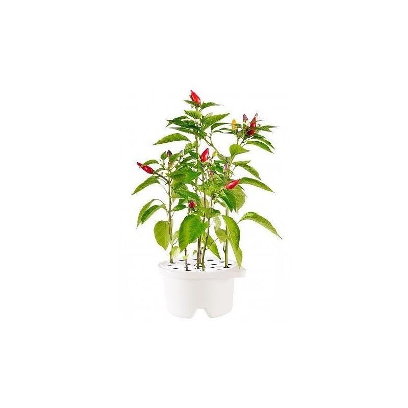 Click & Grow Smartpot refill Tšillipipar