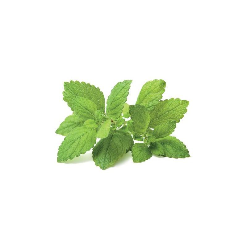 Click & Grow Smart Garden refill Sidrunmeliss 3tk