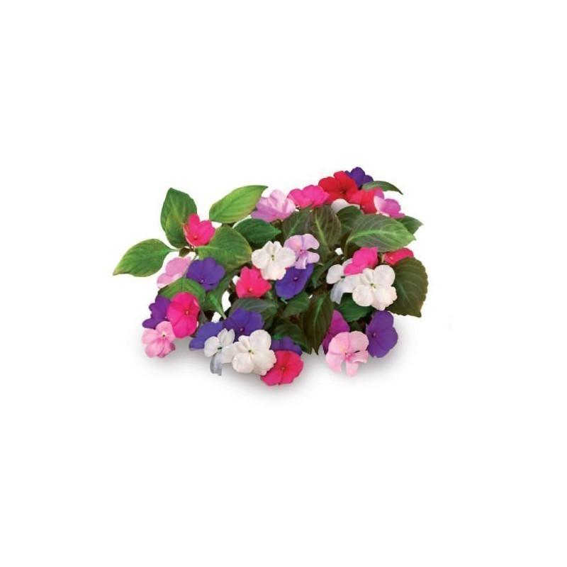 Click & Grow Smart Garden refill Busy Lizzie 3pcs