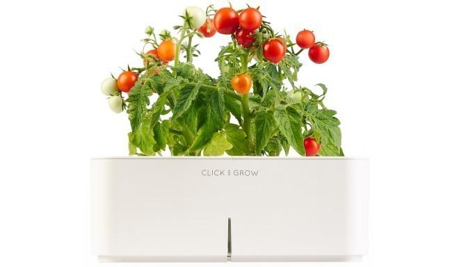 Click & Grow стартовый комплект, Мини томат