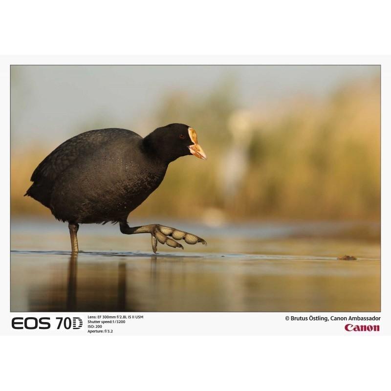 Canon EOS 70D + Tamron 18-270mm VC PZD