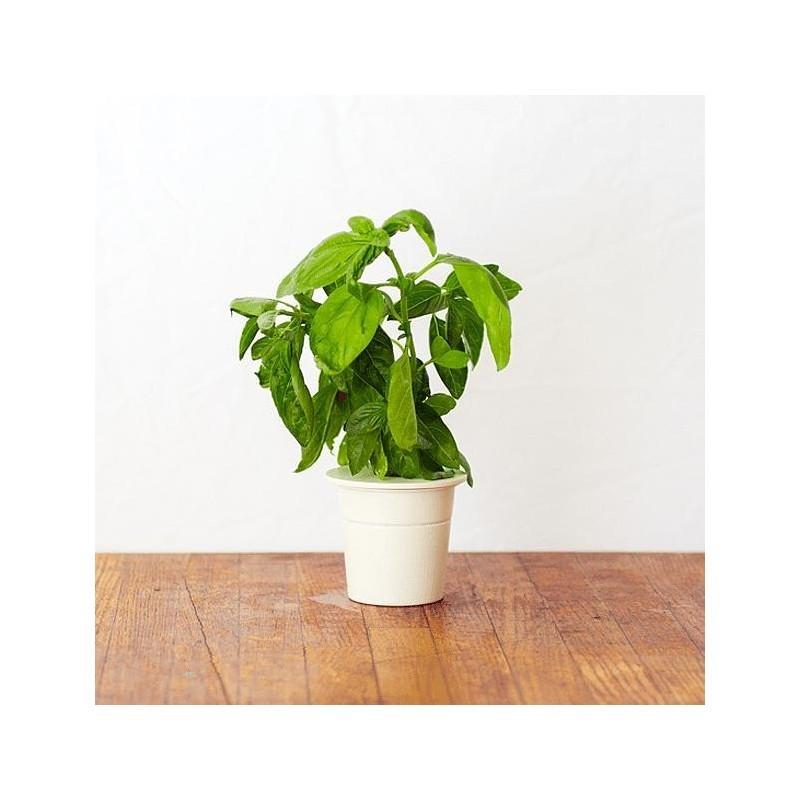 Click & Grow Smart Herb Garden refill Basil 3 pcs