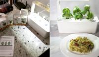 Теперь в «умном» горшке Click&Grow можно выращивать мяту, петрушку, стевию, тимьян и клубнику
