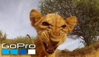 VIDEO: TOP 10 looma kohtumist GoPro kaameraga